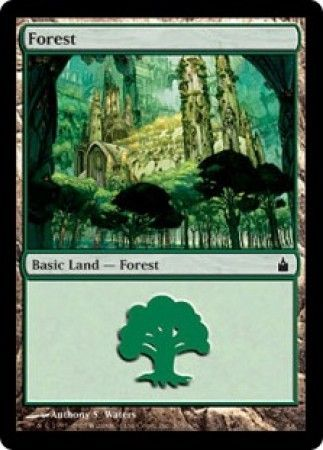 Forest - 305/306 - Common Land