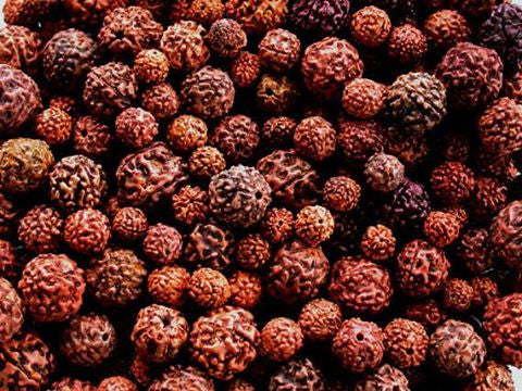 Rudraksha Frequently Asked questions