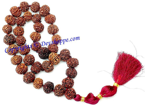 7 mukhi (Seven faced) rudraksha mala , 36+1 beads of nepali origin - Devshoppe