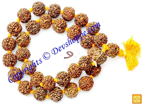 Giant sized Six faced Rudraksha mala of 32+1 beads - Devshoppe