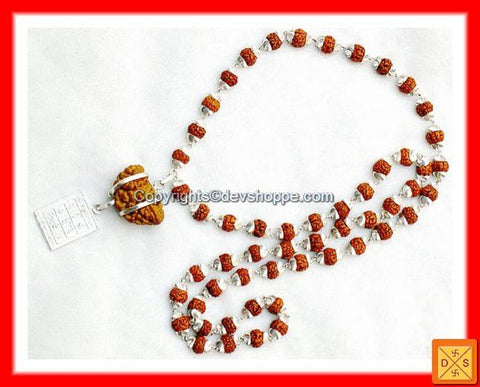 One Faced (1 Mukhi) Rudraksha with Surya Yantra and Silver Rudraksha Mala - Devshoppe