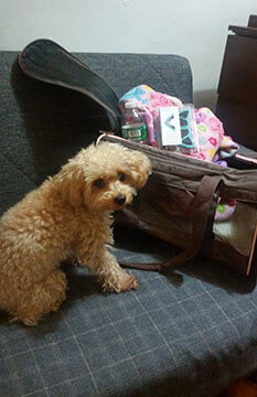 Tips and Tricks Traveling with your Pet