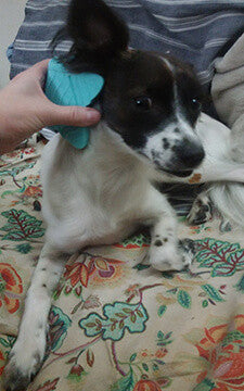 BendiBrush Brushing Short Haired Dogs