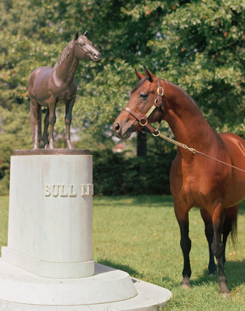 Citation, Kentucky Derby Winner, Among Calumet's Finest