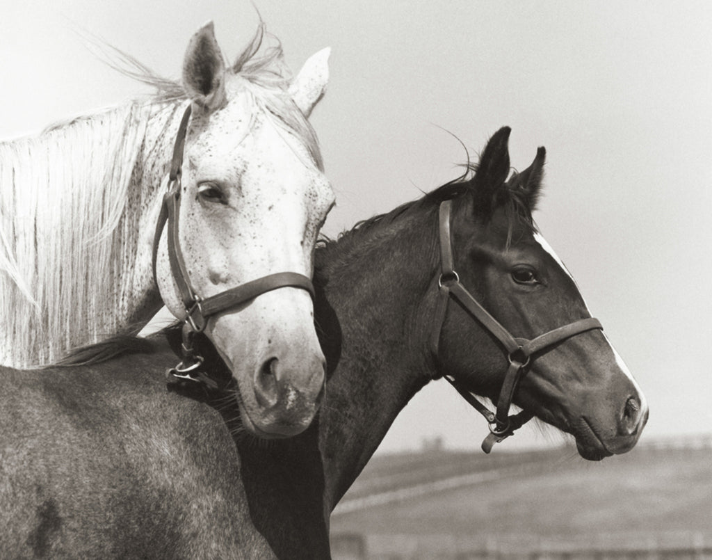 Tony Leonard's Mares and Foals for Mother's Day