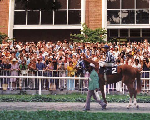 Secretariat in the Paddock at Belmont