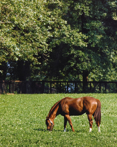 Secretariat in Field
