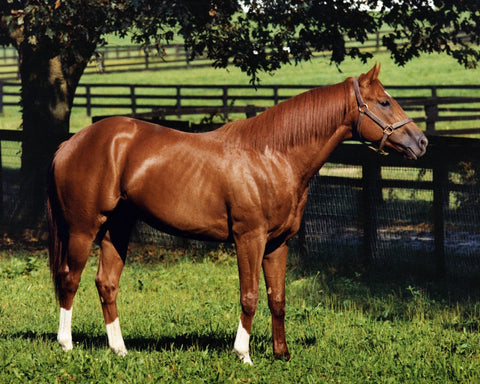 Secretariat in his Paddock