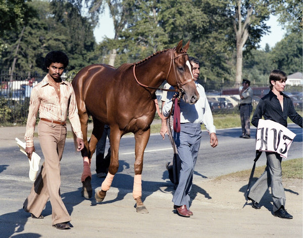Affirmed Walking to the Travers, 1978