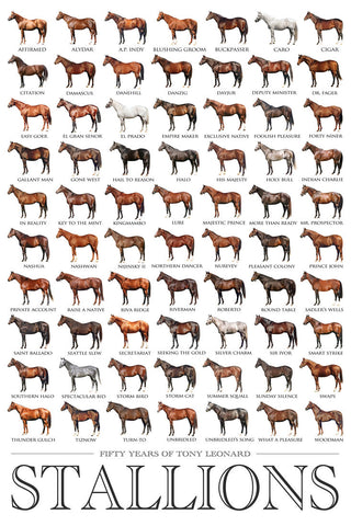 50 Years of Stallions Poster