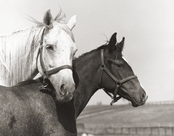 Lady's Secret and Foal