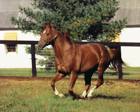 Secretariat at Claiborne Farm