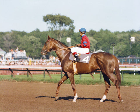 Alydar at the Travers