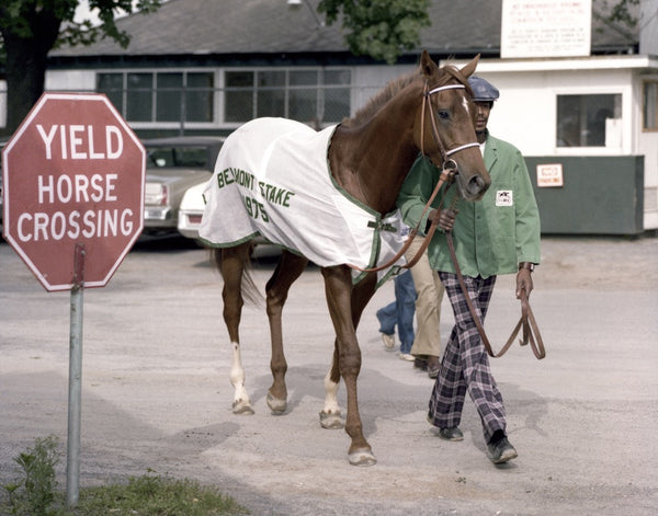 Walking to the Belmont Stakes, 1975