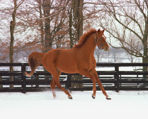 Affirmed in Snow