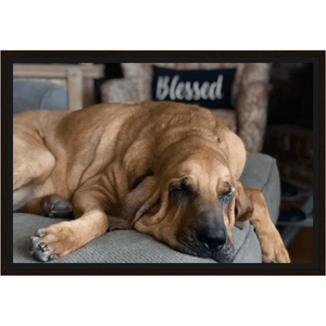 Molly Hound Framed Canvas - The Bloodhound Shop