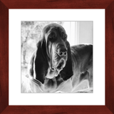 Texas Hound Framed Prints - The Bloodhound Shop