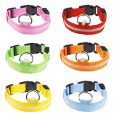 Safety All Dogs Collar Nylon Solid LED - The Bloodhound Shop