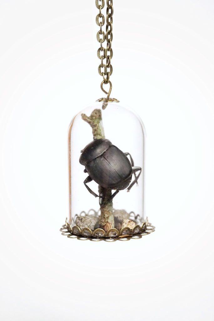 Black Beetle Terrarium Dome Necklace