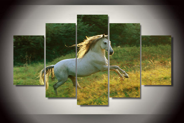 White Horse On the Field 5 Piece Art Canvas