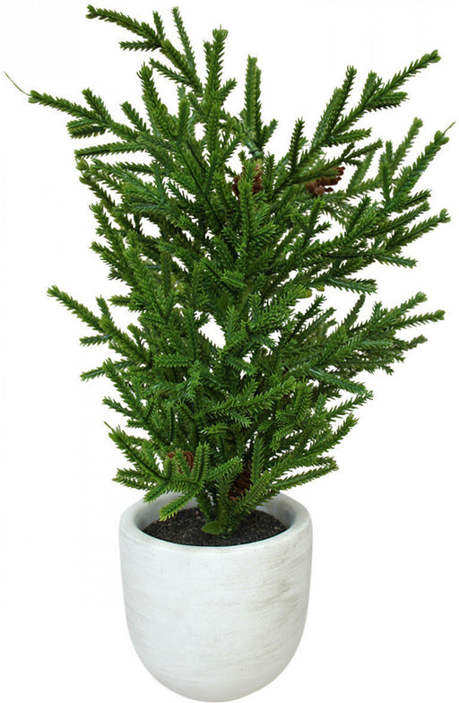 Christmas Tree Classic Potted