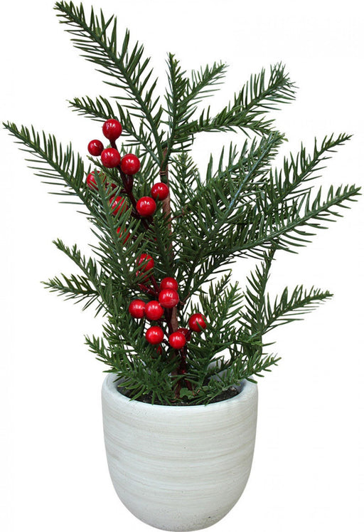 Christmas Tree w/ berries Potted