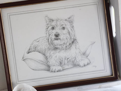 Framed Print by C Varley Scottie Dog on Pillow
