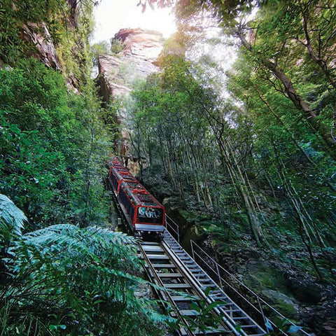 Scenic World UTA Unlimited Discovery Pass