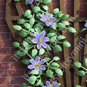Flower Kit, Clematis, Blue