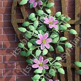 Flower Kit, Clematis, Pink