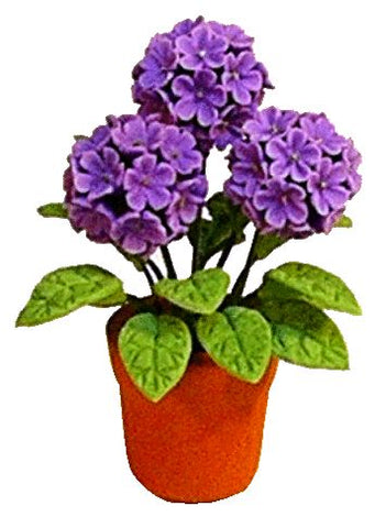 Hydrangea in Clay Pot, Purple