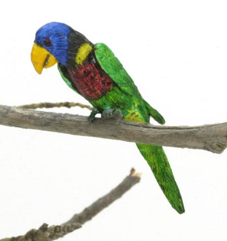 Green Naped Lorikeet Bird