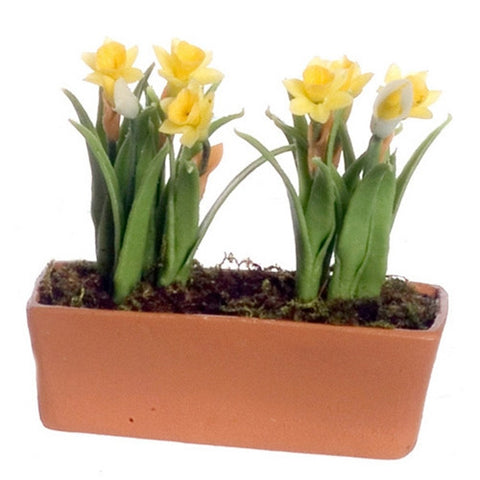 Yellow Daffodils in Terra Cotta Planter