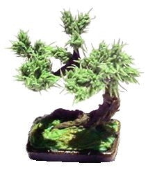 Miniature Scale Bonsai Tree