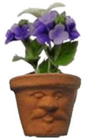 African Violets in Face Pot
