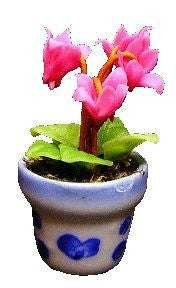 Pink Fushia in Design Pot