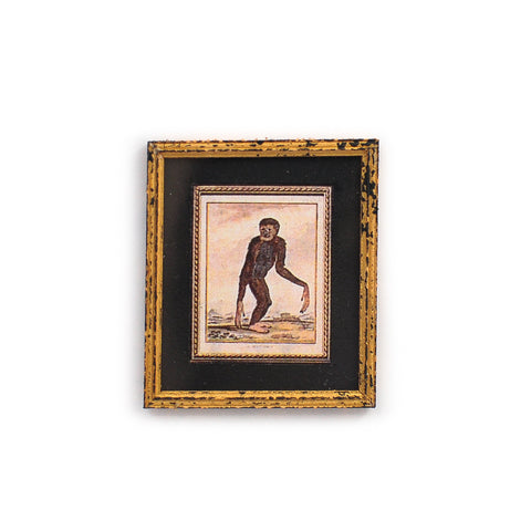 Framed and Matted Monkey