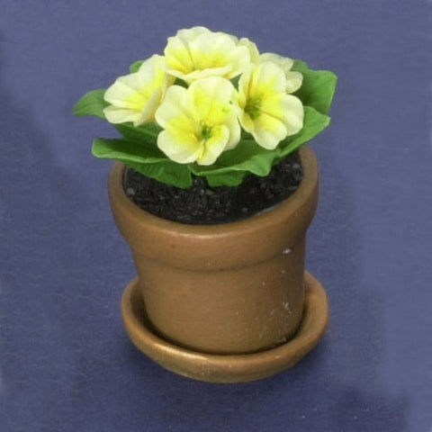 Yellow Primula In Aged Pot