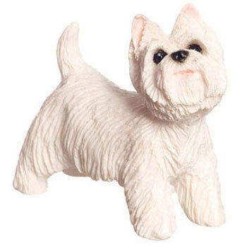 West Highland Terrier, White