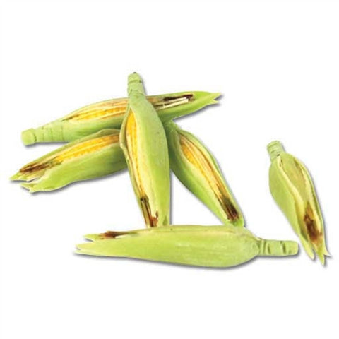 Corn, Set of Six Ears
