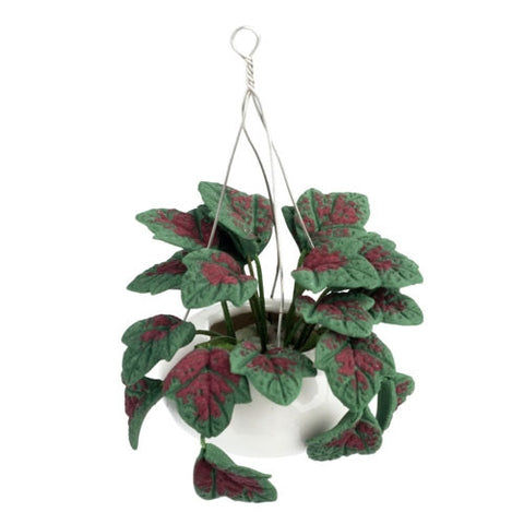 Hanging Pot with Dark Green Plant OUT OF STOCK
