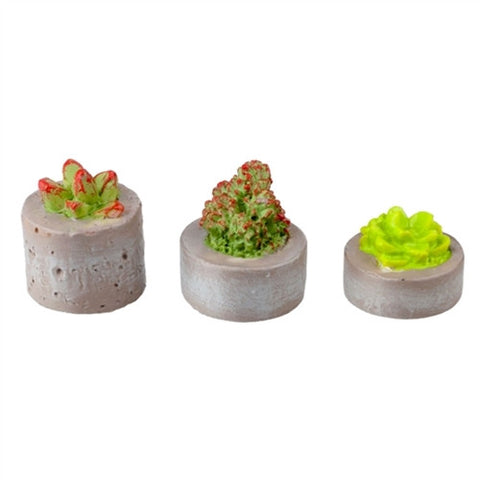 Succulents in Planter, Set of Three, Resin
