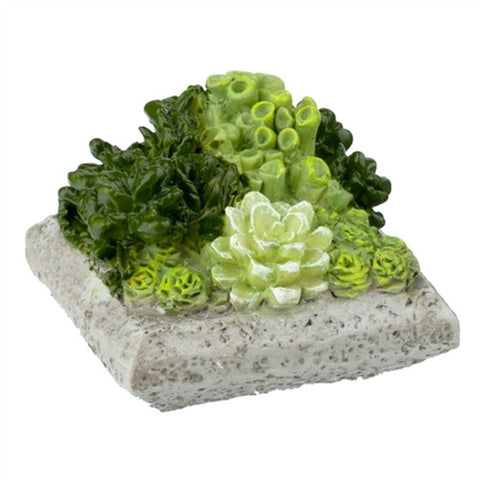Low Square Succulent Planter