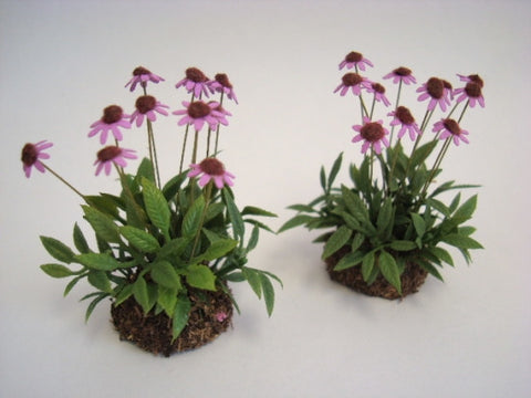 Pink Cone Flowers in Dirt, Pair of Two