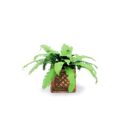 Miniature Fern in Square Planter by Judy Travis