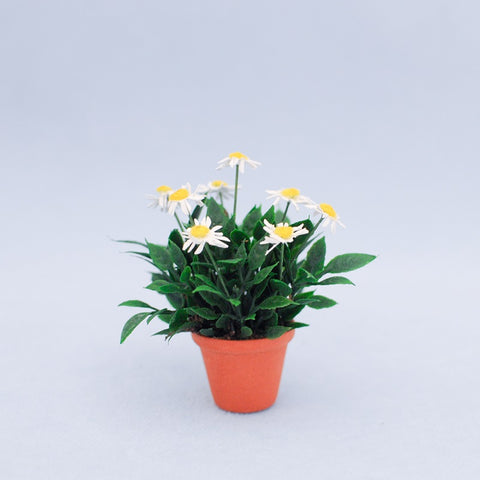 Miniature Scale Pot of White Daisies by Judy Travis