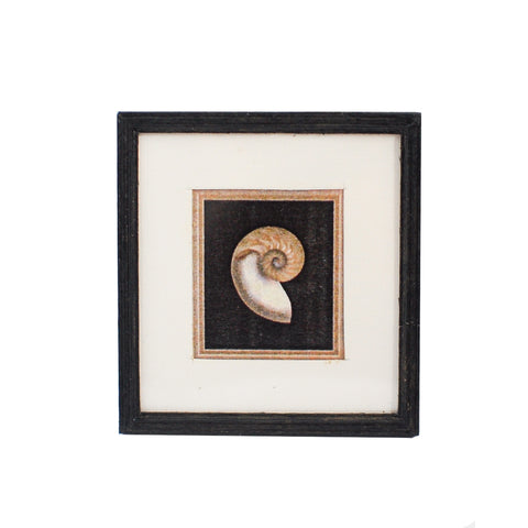 Print, Matted and Framed, Seashell