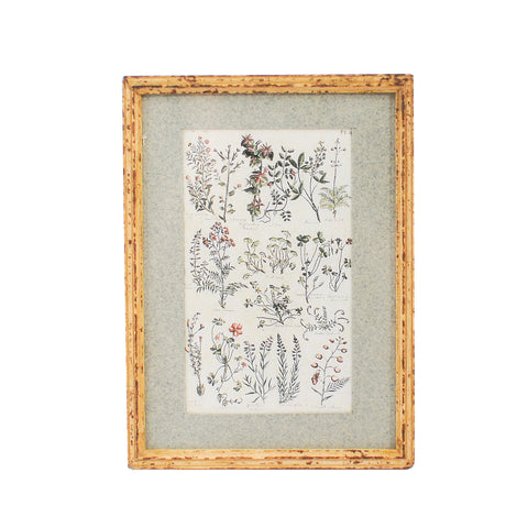 Framed and Matted Botanical Print P40