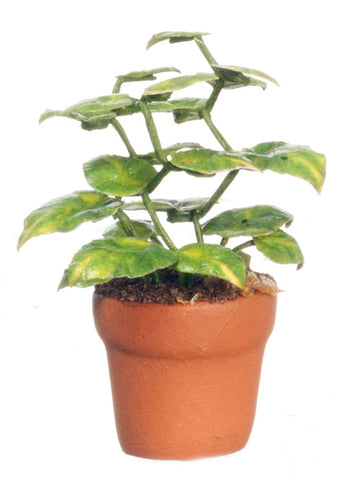 Small Philodendron Green Plant in Terra Cotta Pot