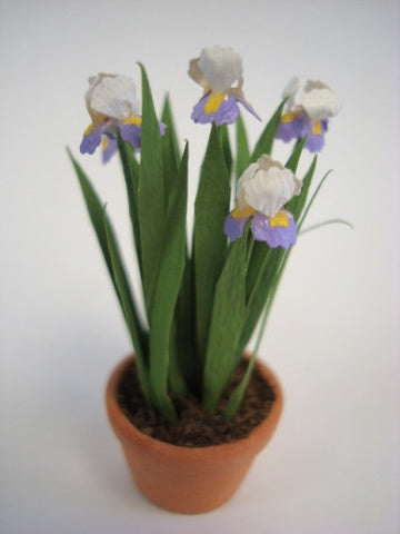 Potted Iris
